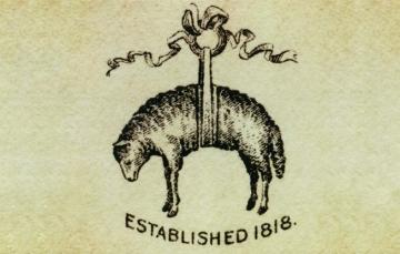 Golden-fleece-of-bb